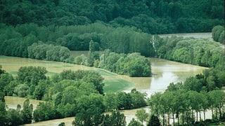 Auengebiet «Chly Rhy» im Aargau wird definitiv renaturiert