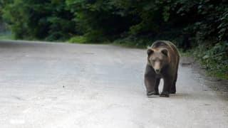 Urs en l'Engiadina Bassa
