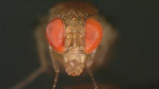 Sprengmeister, Mörder, Nymphen: Insekten in Grossaufnahme