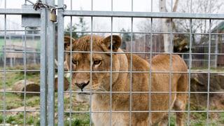 Schluss und aus: Der Raubtierpark Subingen muss weg