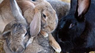 Tierkäfige von Hornbach in der Kritik (Artikel enthält Audio)
