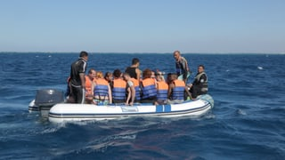 Video «Fleisch aus dem Drucker,Schweizer Shuttle, Delfin-Forschung» abspielen
