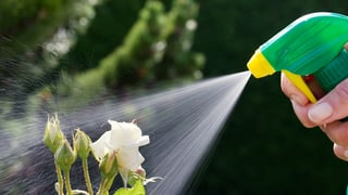Gärtner können Bienen vor Pestiziden schützen