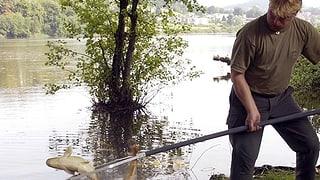 Fische in der Region leiden unter den hohen Temperaturen