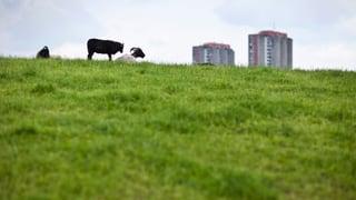 So stellt sich der Bundesrat die Zukunft der Schweizer Bauern vor