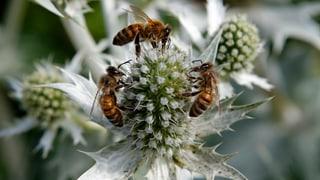 Freiheit für die Honigbienen