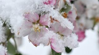 Frost lässt Bauern bibbern