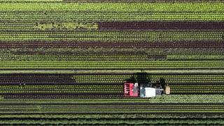 Innovative Bauern sollen belohnt werden