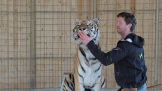 Training mit Tigern
