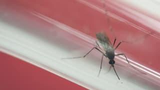 Spustar gieus olimpics a Rio pervi da Zika? - WHO examinescha
