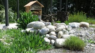 Freiburger Berufsschule will Biodiversität im Garten retten