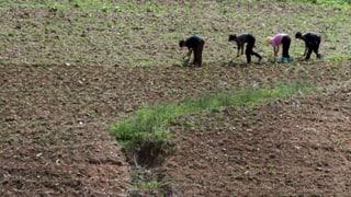 Nordkorea schürt Angst vor Hungersnot