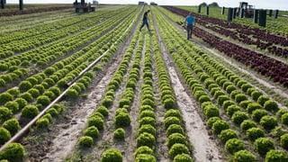 Mehr Artenvielfalt? Bio-Bauernhöfe reichen nicht