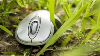 Grüne Wende in der Computer-Branche