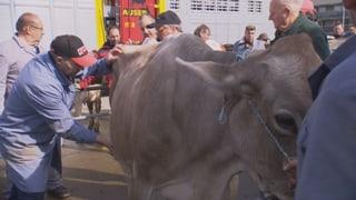 Video «Post-Schikane. Die Tricks der Viehhändler. NC-Kopfhörer-Test.» abspielen