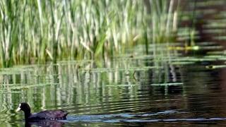 Kleinen Berner Seen geht's immer noch nicht gut