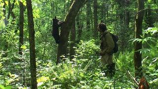 Video «Mit Bärenwaisen durchs Tigerland – Reno Sommerhalder in Sibirien» abspielen