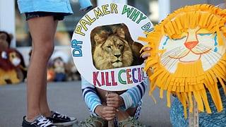 Jäger von Löwe #Cecil wird zum Gejagten