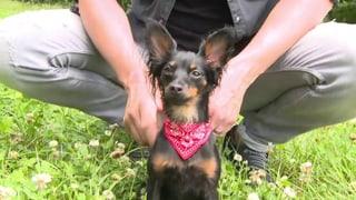 «Gassi & Gloria» – Schweizer Promi-Hunde stellen sich vor (Artikel enthält Video)