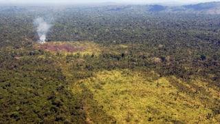 Für den Amazonas ist Chinas Hunger verheerend