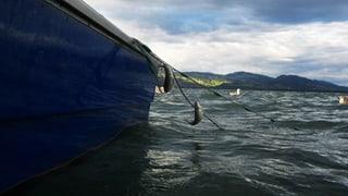 Bodensee-Fischer fordern Hilfe aus Bundesbern