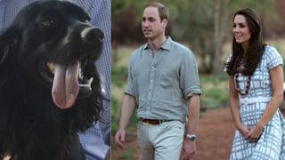Ohne George, dafür mit Lupo: Kate und Williams Zeit zu zweit