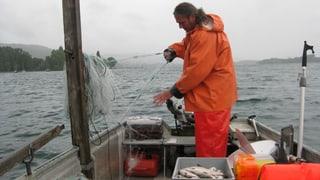 «Summerferiä i dä Ostschwiz»: Mit dem Fischer auf dem Bodensee