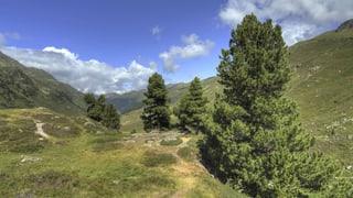 Klimawandel: In Graubünden leiden vor allem die Bäume im Tal