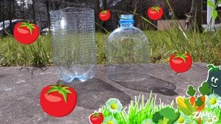 Tomatensetzlinge in der PET-Flasche?