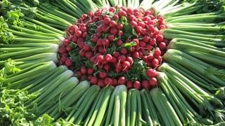 75 Jahre Wandel: Gemüseanbau im Seeland