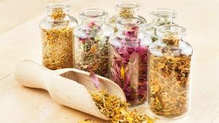 Heilkräuter – Die Natur-Apotheke hat wieder geöffnet