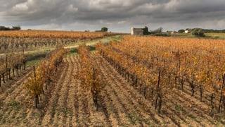Klimawandel bringt französische Winzer in die Bredouille