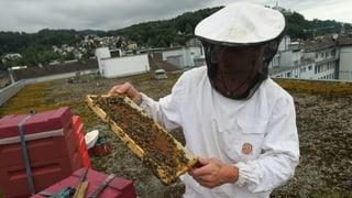 Der Honig von Stadtbienen ist natürlicher als man denkt
