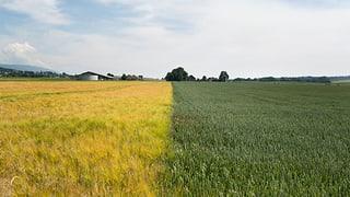Weniger, dafür grössere Landwirtschaftsbetriebe