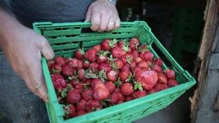 Eine Tonne Erdbeeren ist gerettet