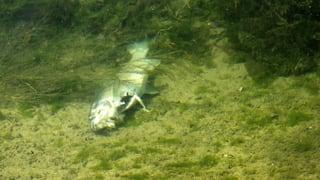 Das Leiden der Fische: Das sind die problematischsten Pestizide