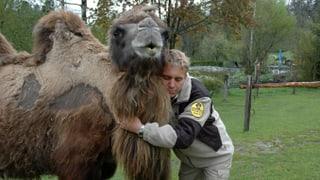 «Kuschliges Kamel»: Das Zootier-Ranking von Reto Scherrer