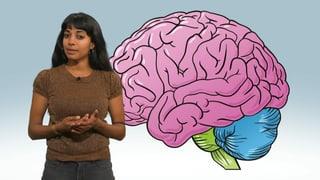 Wie funktioniert unser Gehirn?