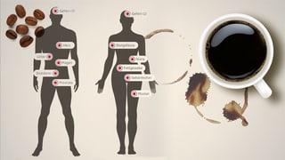 Was bewirkt Kaffee im Körper?