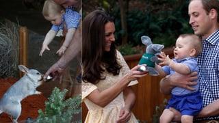Royale Ostern Down Under: Baby George trifft den «Aussie»-Hasen