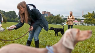 Im Kanton Zürich sind Hundekurse in Zukunft freiwillig