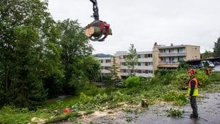 Asiatischer Laubholzbockkäfer: So reagiert Freiburg