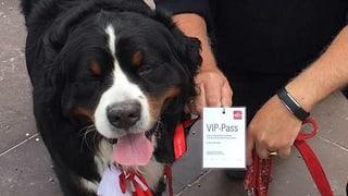 Holländerhund Dokan blickt zurück auf die Dreharbeiten