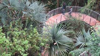 10 Jahre Masoala-Halle mit einem Blick «von oben»