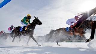 Pferderennen nach schwerem Unfall beendet
