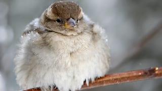 Das Vogelsterben geht weiter – mit einzelnen Ausnahmen