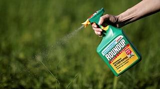Monsanto muss einem US-Kläger 80 Millionen Dollar zahlen