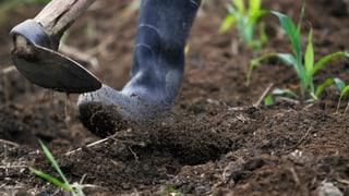 «Es ist ein täglicher Kampf, sichere Lebensmittel zu produzieren»