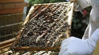 Deutlich mehr Bienen haben den Winter überlebt