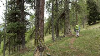 Biodiversitad en CH: organisaziuns d'ambient pretendan mesiras